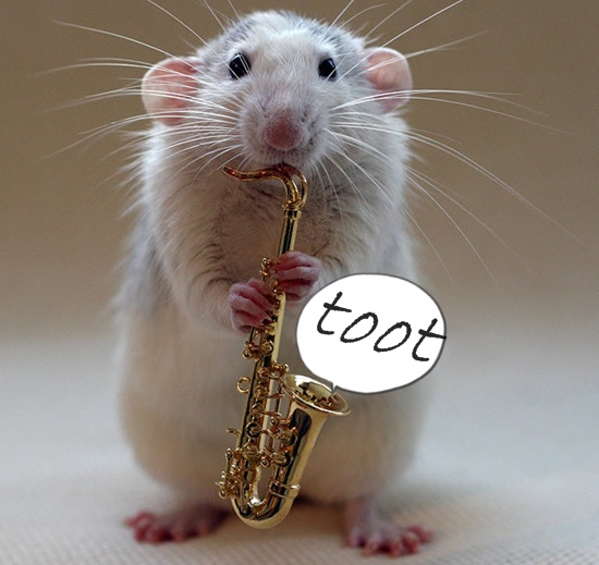 talented rat cropped